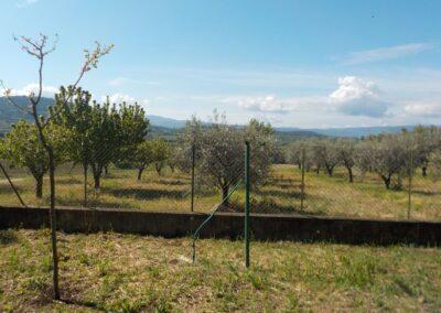 jeunes arbres fruitiers en bord de clôture