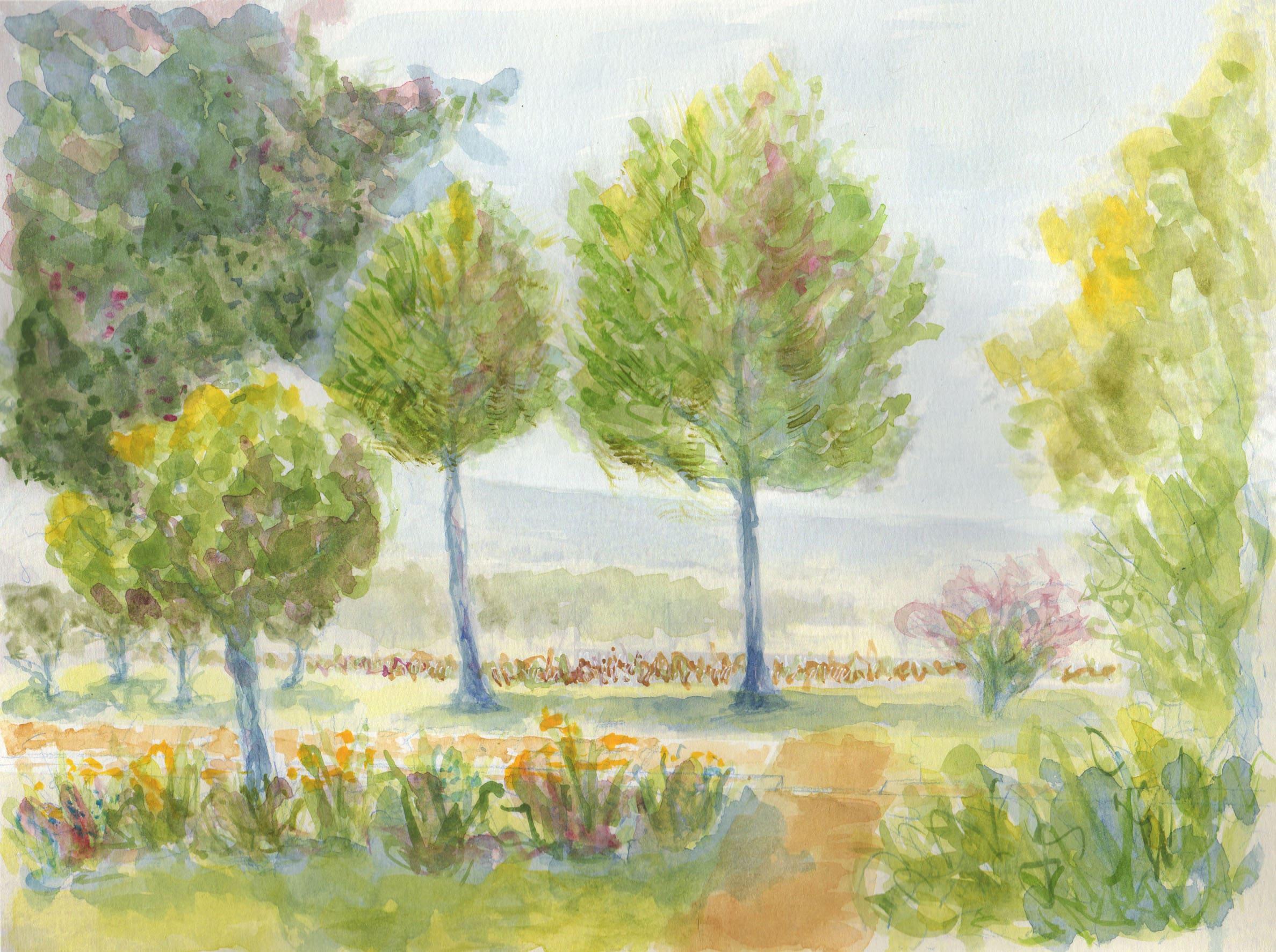 Aquarelle - pins provence jardins secs