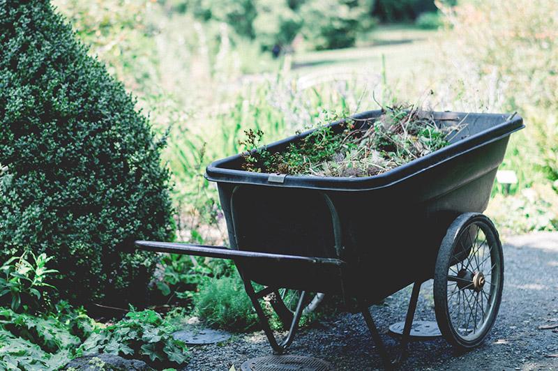 Brouette enherbée dans un jardin