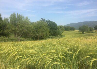 environnement agricole
